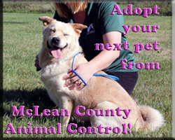 Adopt From McLean County Animal Control